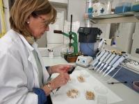 La investigadora del CEVO durante la realización de exámenes técnicos